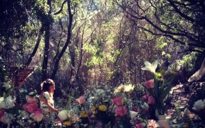 משתה טרום פורים של הסועד ביער הפיות